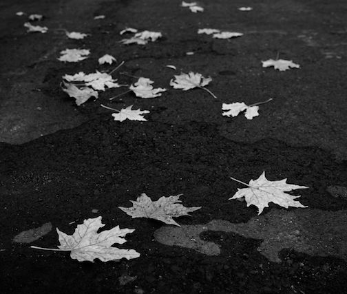 Leaves by Mark Tessier.