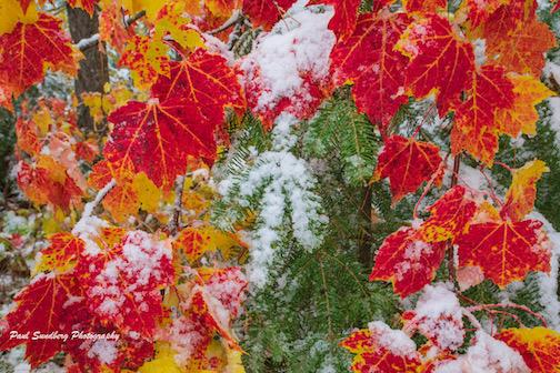 First snow by Paul Sandberg.