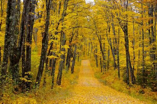 Wonders of fall by Sandra Updike.