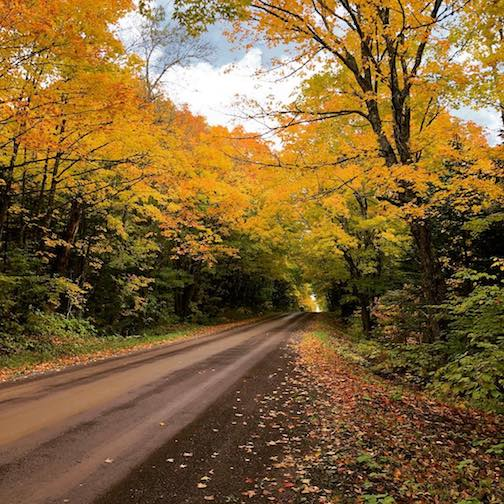 """I am so glad I live in a world where there are Octobers."" Anne of Green Gables, L.M. Montgomery."