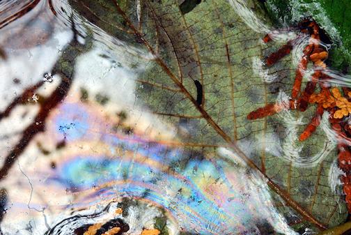 Rainbows6, photograph by Elizabeth Blair.