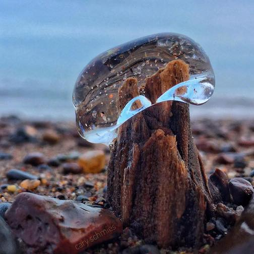 An ice button mushroom by Gary Schmies.