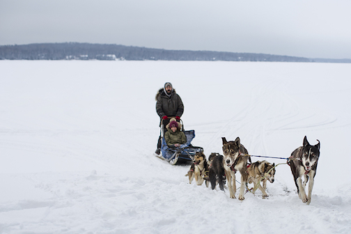 Skyport Lodge offers sled dog tours on Saturdays and Tuesdays.