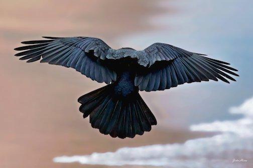 As the Crow flies, by John Heino.