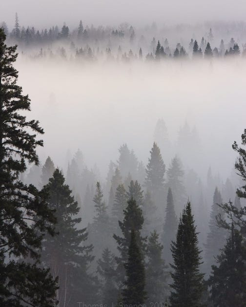 Heavy fog blankets the Temperance River Valley by Thomas Spence.
