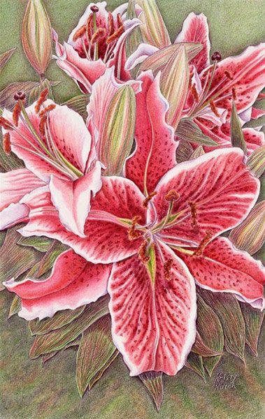 Artwork by colored pencil artist Kristy Kutch. She will be demonstrating at the Art Colony on Wednesday, June 26.