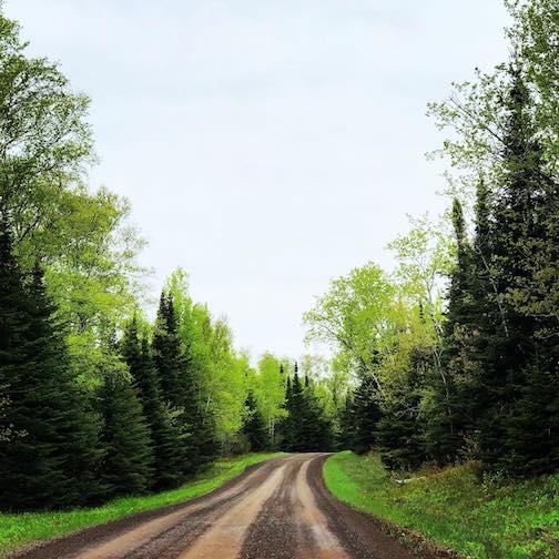 Spring Greens by Sarah Jorgenson.