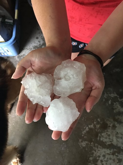 Hail stones that crushed everything in Little Falls recently.