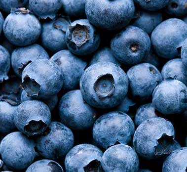 Sunday is the last day of the Gunflint Trail Biggest Blueberry Contest.