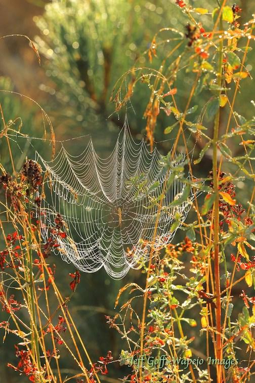 Michigan spider web by Jeff Goff. (Photo courtesy of Lake Superior Magazine.)