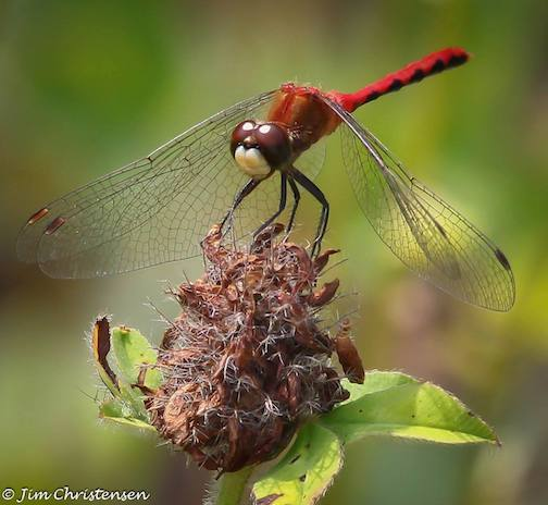 Dragonfly by Jim Christianson.