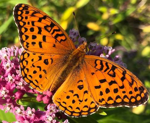 A beautiful butterfly by Maryl Skinner.