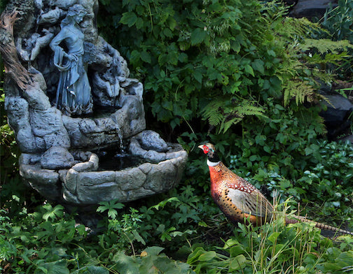 A local pheasant seems fascinated by Our Lady of the Lake fountain in Duluth by Bruce Ojard.