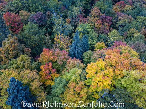 Above the treetops by David Johnson.