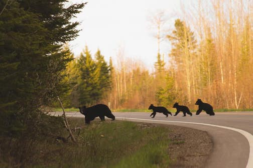 You never know what might be waiting for you around the next curve. Photo courtesy of the Gunflint Trail Association.