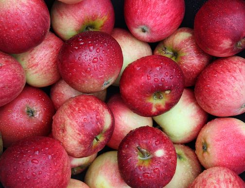 The 1st annul Grand Marais Apple Festival will be held Saturday, Oct. 19.
