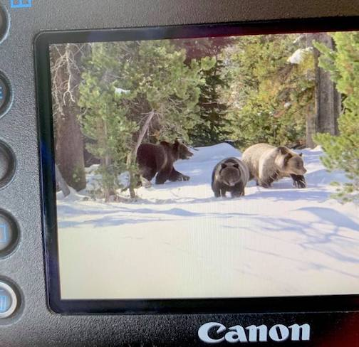 Photography grizzlies along the Continental Divide by Heidi Pinkerton.
