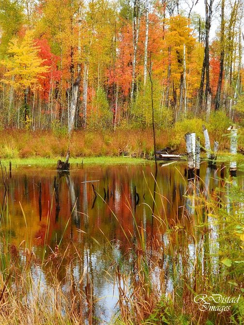 Reflection: Pond in the Woods by Roxanne Distad.
