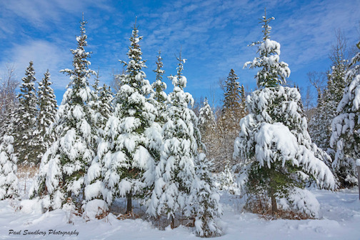 Winter Wonderland by Paul Sundberg.