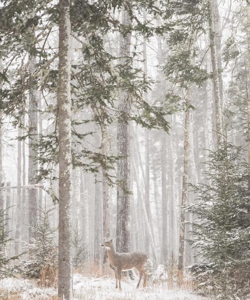 Minnesota Northwoods by Calie Vannet Estrada.