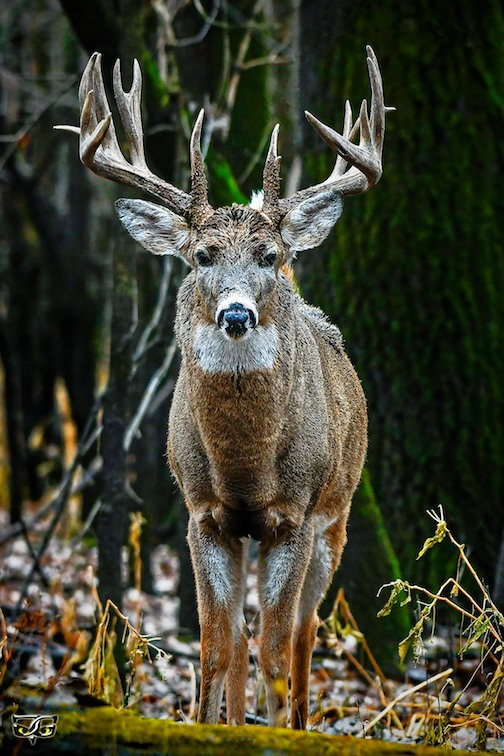 I ran into this guy in the wood today by Jeff Grotte.