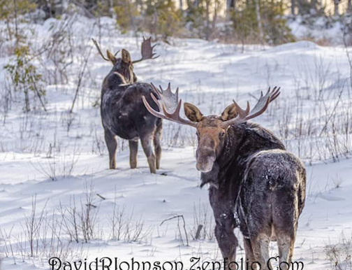 Morning with the boys by David Johnson