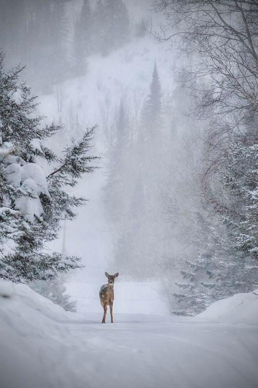Snowy backroads by Dustin Lavigne.