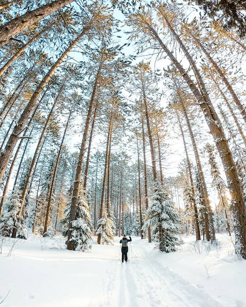 My favorite spot to go after a snowfall on the Gunflint Trail by Emily Siefkes.