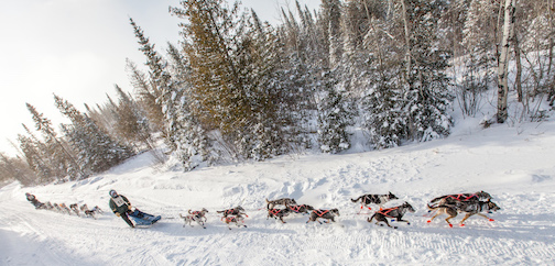 The Gunflint Mail Run Sled Dog Race begins at Trail Center on Saturday morning. It will also be broadcast live on WTIP. (Photo courtesy of the Gunflint  Mail Run.)