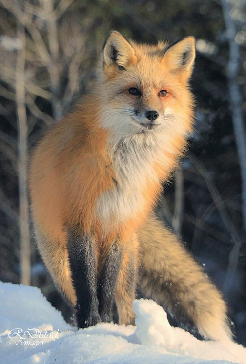 How fun to see this beauty enjoying the warmth of the sun this morning by Roxanne Distad.