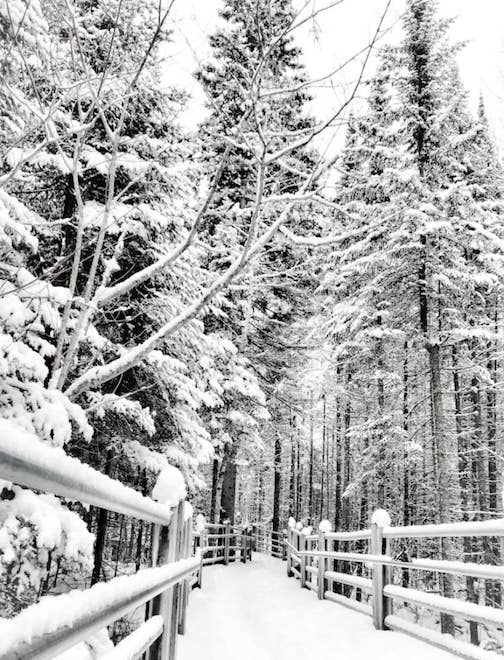 Winter Scene courtesy of Grand Portage State Park.