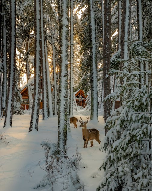 Afternoon in the Northwoods by Jeffrey Doty.
