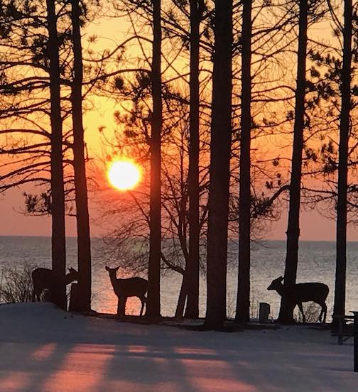 The deer were enjoying a quiet sunrise until I came along. Photo by Terri Lampi.