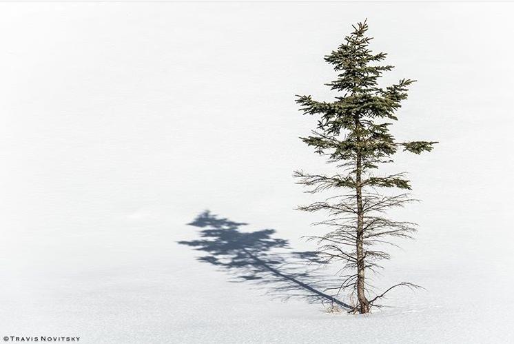 Lone Pine by Travis Novitsky.