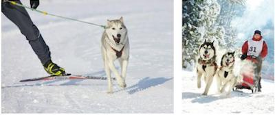 The Go Dog North Shore derby and skijoring event will be held from 8 a.m. to 5 p.m. on Saturday, March 7 at Trail Center.