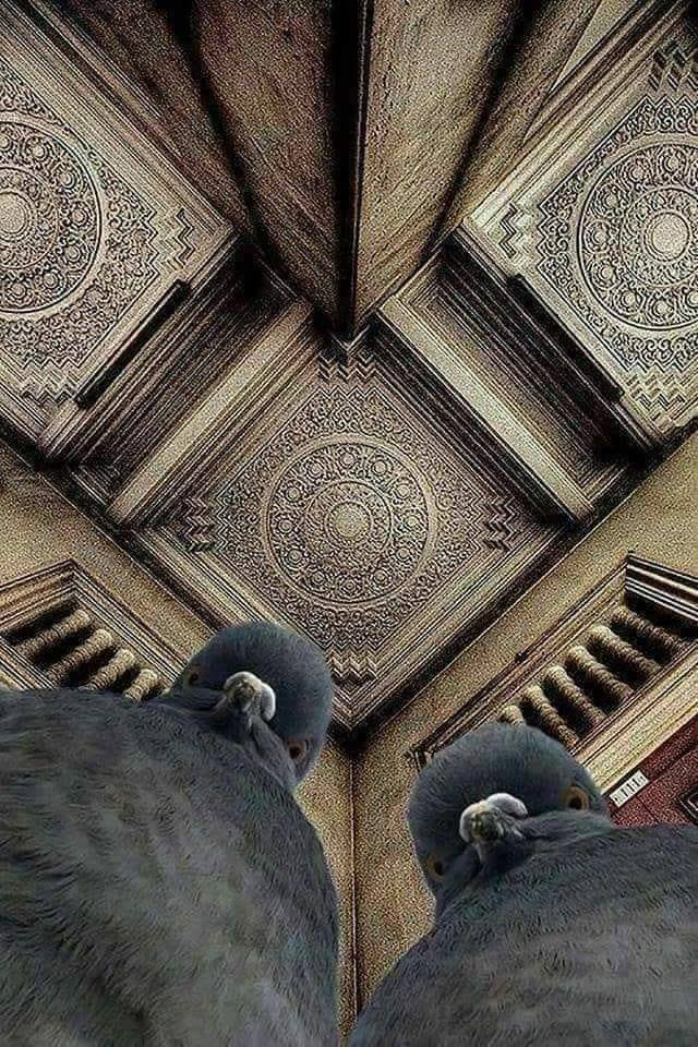 The photographer was lying on the ground, trying to shoot the ceiling. The pigeons were concerned. Photography by Alex Kogan.