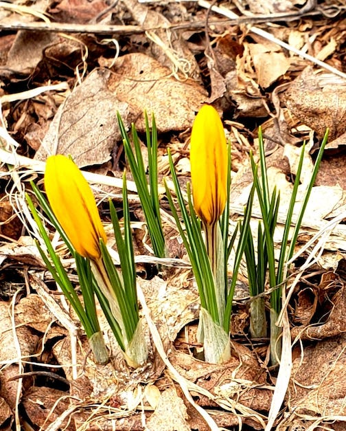 Just spotted these in my yard! By Annie Possis.