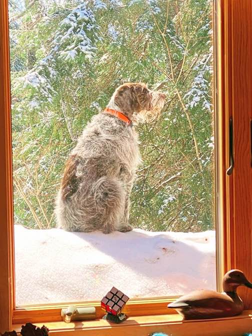 How much is that doggie in the window? By Steve Ortmann.
