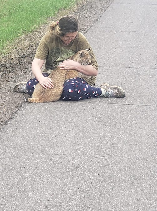 Shelly Johnson holds a bobcat that got hit by a car. Photo by Jay Johnson.