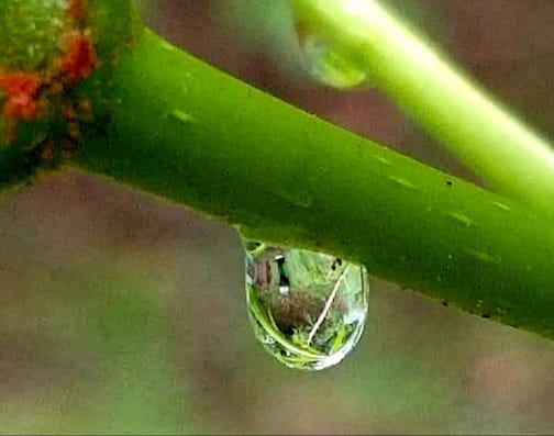 Caught in a raindrop by Judy Gray.