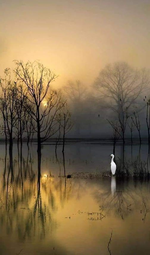 Egret at dawn by Viola Loretti.