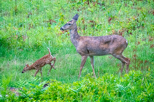 Brave New Fawn by Janice Latz.