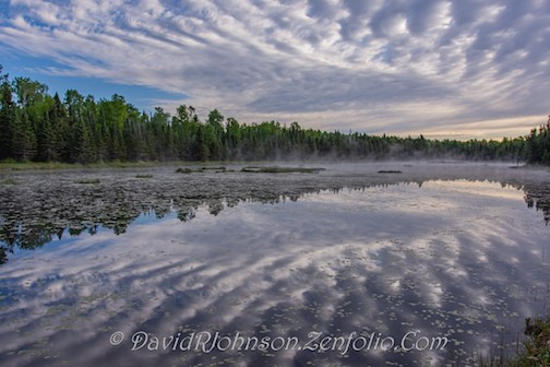 Early morning at a beaver pond by David Johnson.