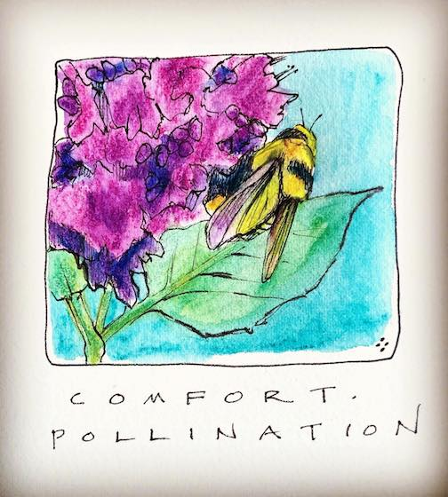 Pollinators. We need them. By Betsy Bowen.