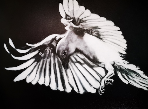 Karasu, white raven, a bird of great luck by Charlotte Durie.