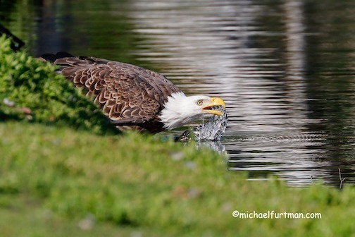 Getting a drink by Michael Furtman.