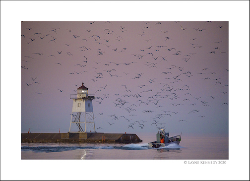 Gulls, Grand Marais by Layne Kennedy.