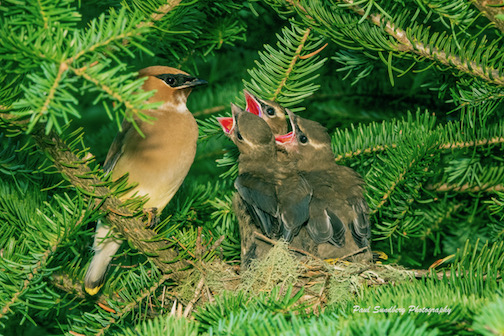 Hatched and hungry.  By Paul Sundberg.