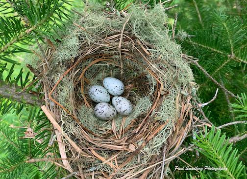 The nest by Paul Sundberg.
