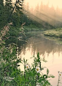 Foggy Morning Reflections by Roxanne Distad.